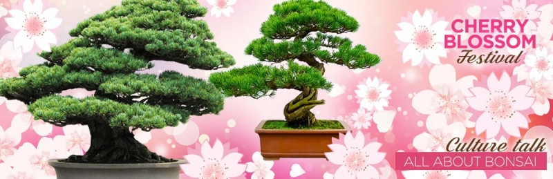 Cherry Blossom Festival Culture Talk - All About Bonsai